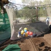 go ape nets kingdom